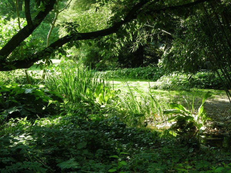 観葉植物の光補償点